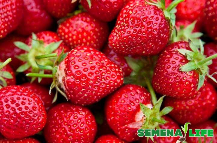 Вкусная ягода клубника