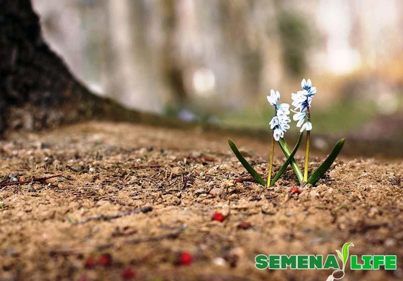 пушкиния почва
