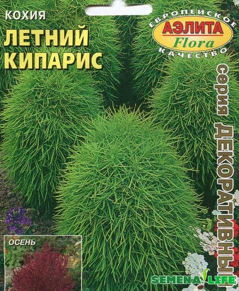 сорт семян летний кипарис