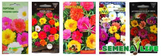 разнообразие семян портулака