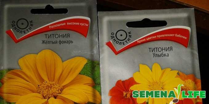 семена желтой Титонии
