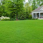 Газонная трава перед домом
