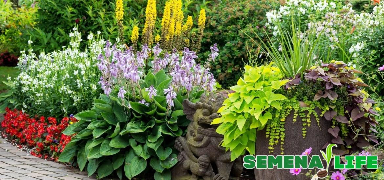 Какие цветы можно посадить в июне семенами, клубнями или 38
