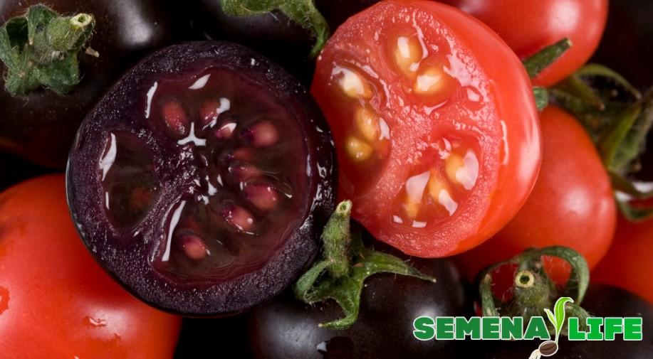 Редкие сорта помидор - черные