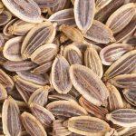 Семена укропные