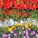 Цветник из разных цветов