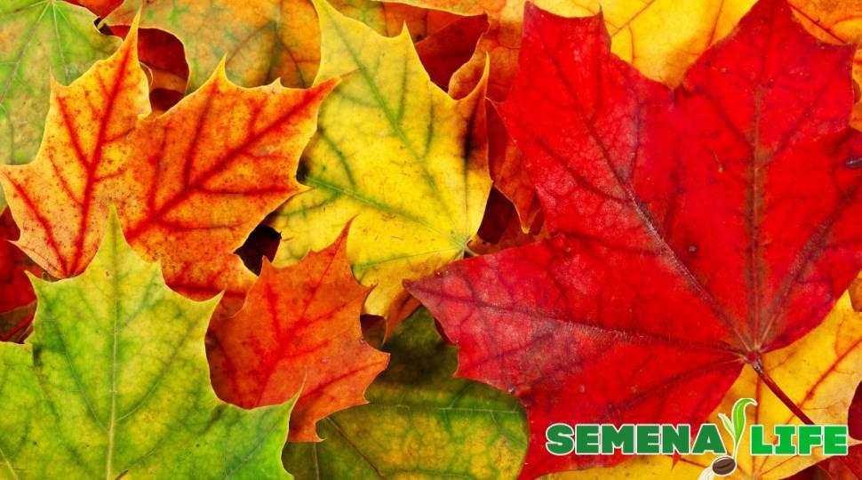 Утепление листьями