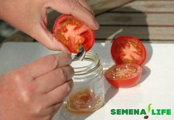 извлечение семян томатов