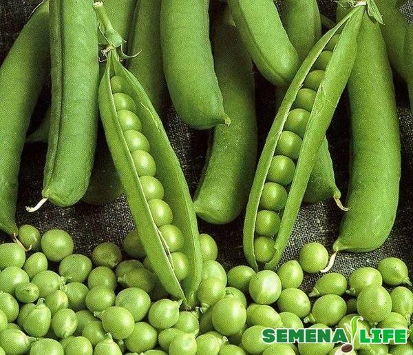 Как отобрать материал для сбора семян