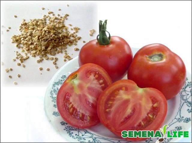 Сбор семян гибридов томатов